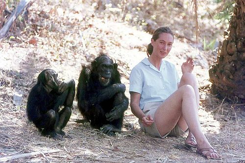 jane goodall s digging up the roots